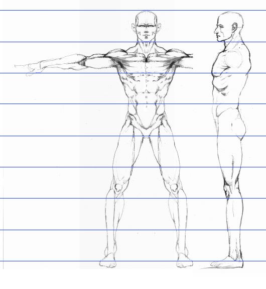 Male Model Sheet